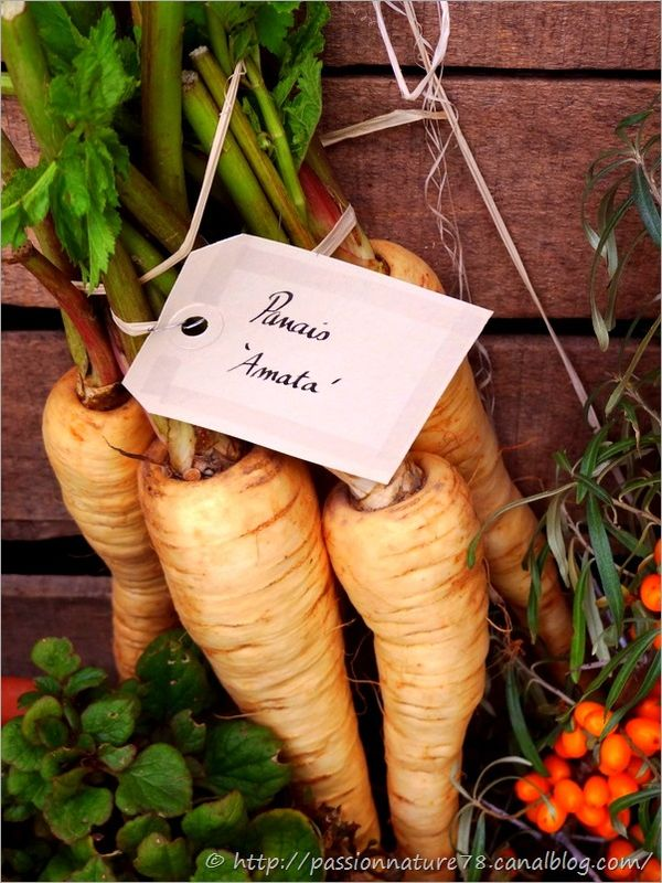 Les légumes d'autrefois (1)
