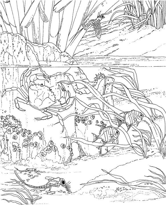 ocean dragon coloring pages - photo#9