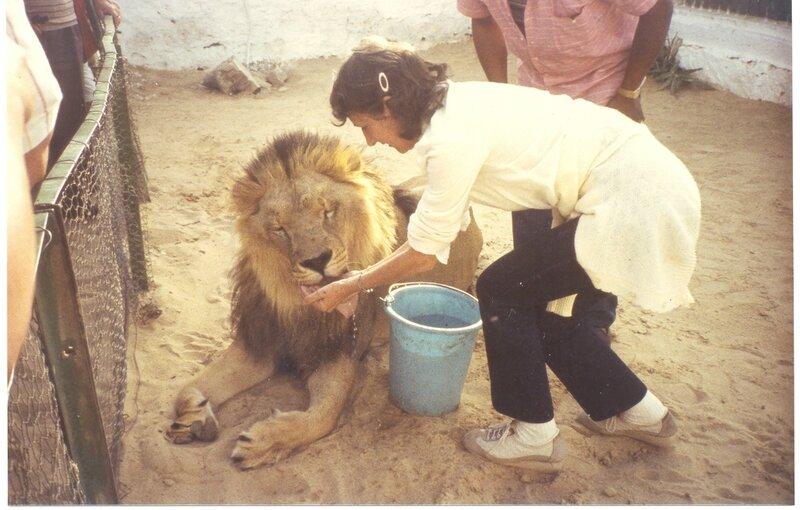 Lion toutoune