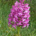 Les orchidées du quercy - 2