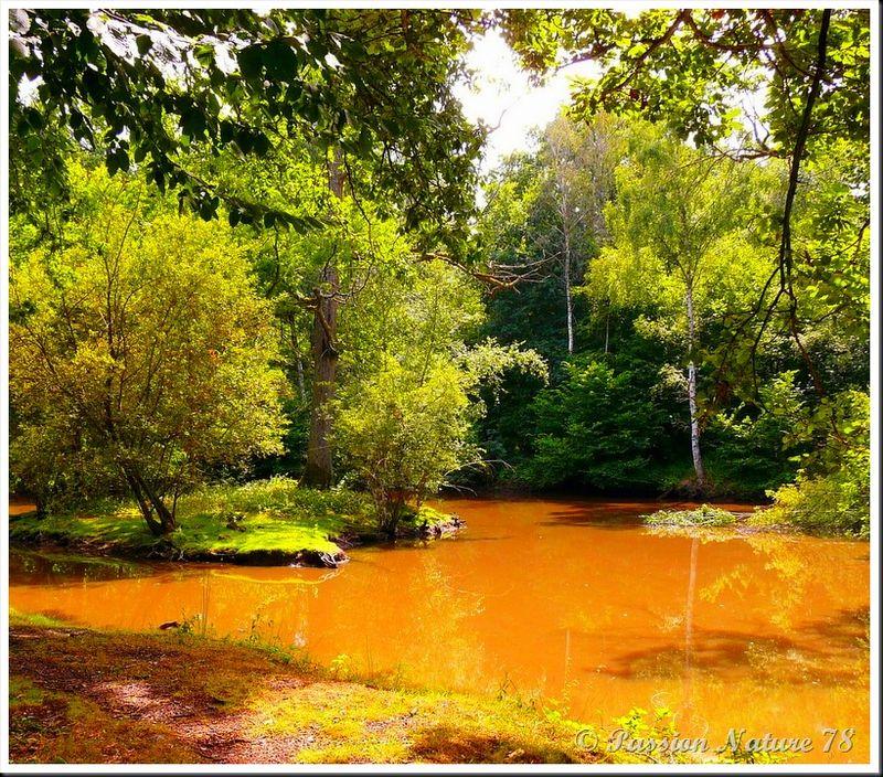 Un air d'Amazonie (15)
