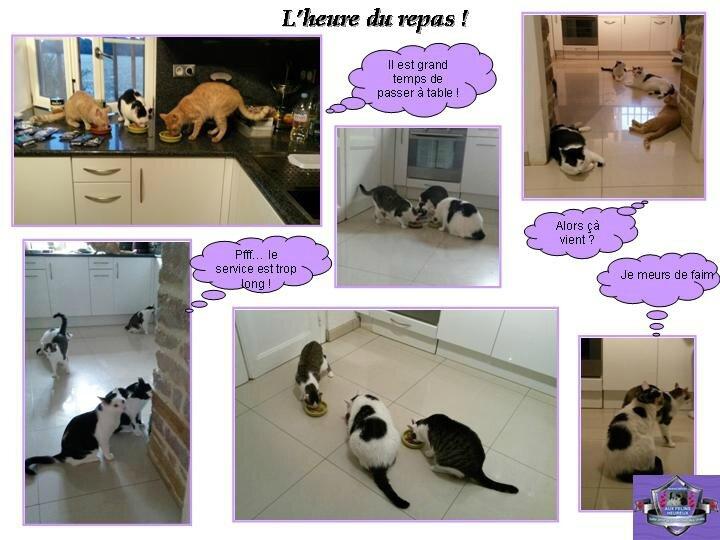 le repas des felins heureux