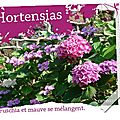 Hortensias