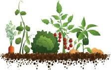 Παράταση λειτουργίας του τοπικού θεματικού δικτύου ''Σχολικοί λαχανόκηποι: καλλιεργώ μέρος της τροφής μου''