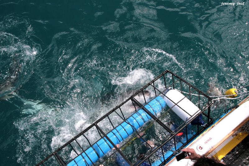 Shark attack 6