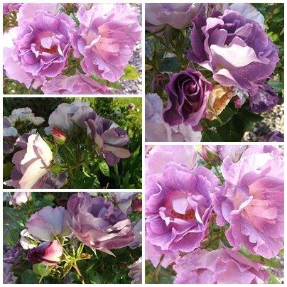 Ciel 10 06 & fleurs (16)