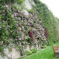 La Roseraie de l'Evêché à Blois