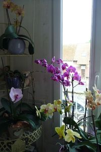 Belles orchidées (1)