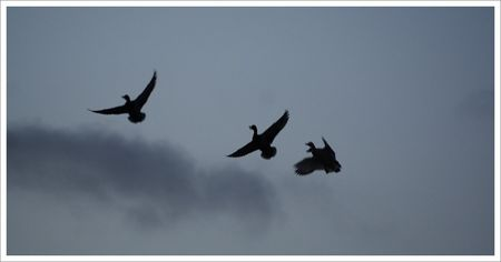 QM_ombres_canards_nuit_300308
