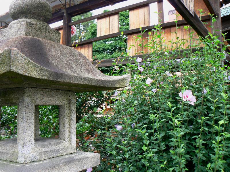Le petit sanctuaire du porc sauvage et des petits for Alexandre jardin le petit sauvage