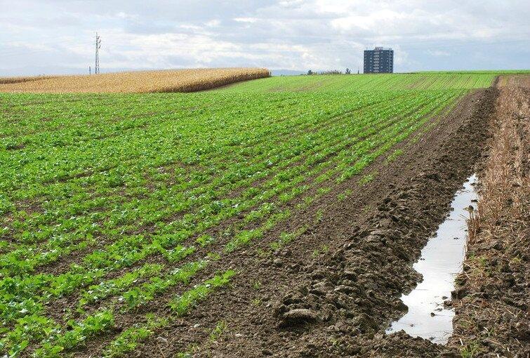 champs sous la pluie-001