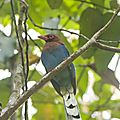 101forêt, Nature, Sinharaja, Sri Lanka