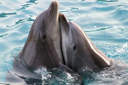 calin_dauphins_284602