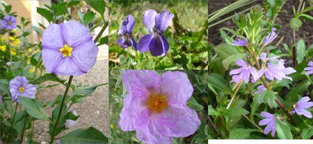 mauve_et_violet