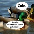 coin !