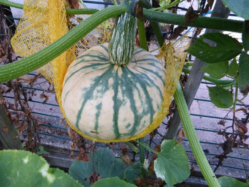 9-courges (3)