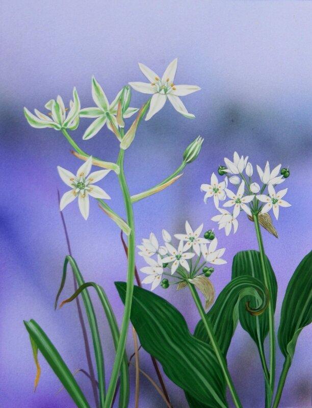 Flore des Pyrénées 44