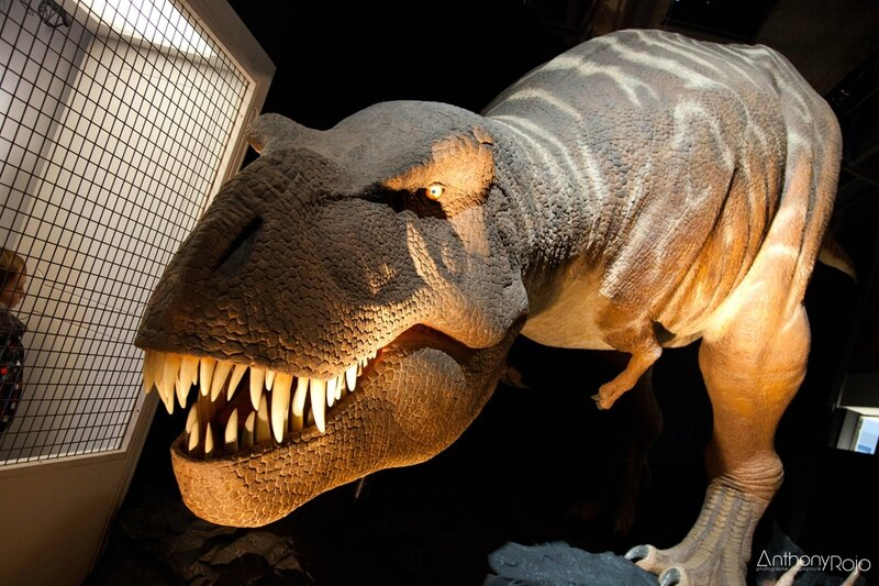 cap_sciences_t-rex_©_Anthony_Rojo-27 copie
