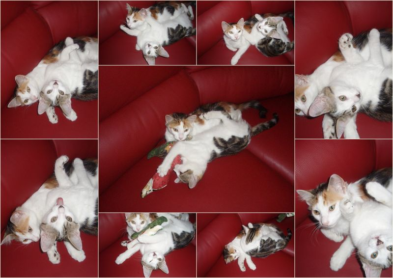 montage_chattes