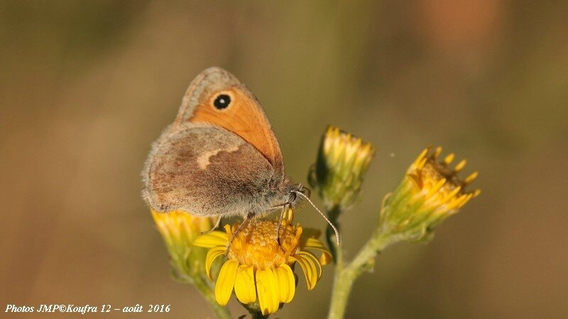 Papillons sur le Guilhaumard
