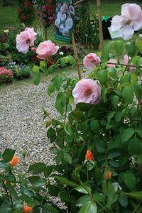 Fête Ecurie du Val Fête de la rose à Veules 219