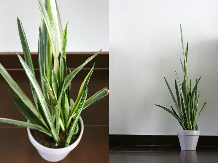 plantes (14)