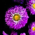 Couleurs de fleurs (52)