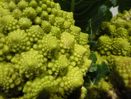 6_CHOUX_ROMANESCO__19_