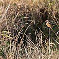 oiseau-loire14-02