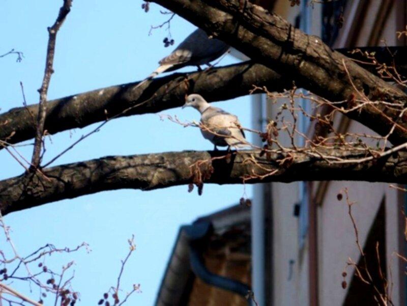 cassanmarieneige-pigeon-18