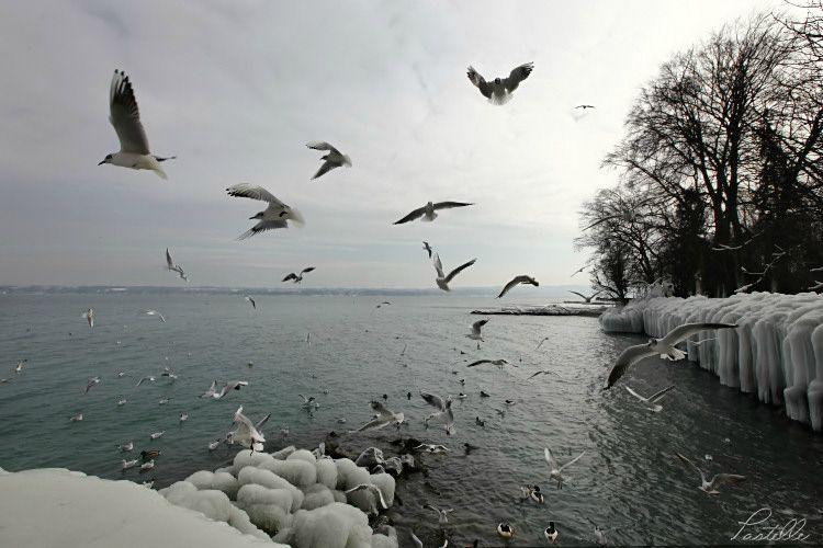 Oiseaux_12 13 02_1825