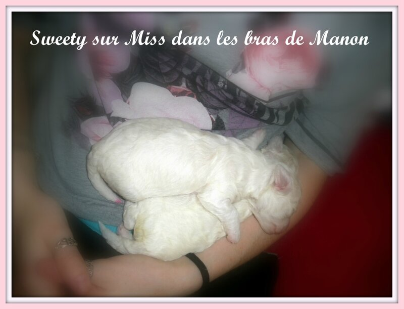 sweety et miss 13 avril