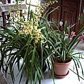 ORCHIDEES JANV