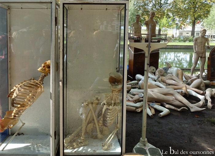 118 Braderie Lille 2017 Brocante Vide grenier Puces Cabinet Curiosité Squelette Mannequin