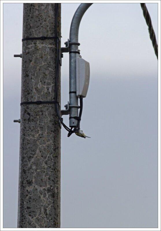 ville mesange gaine cables 261114