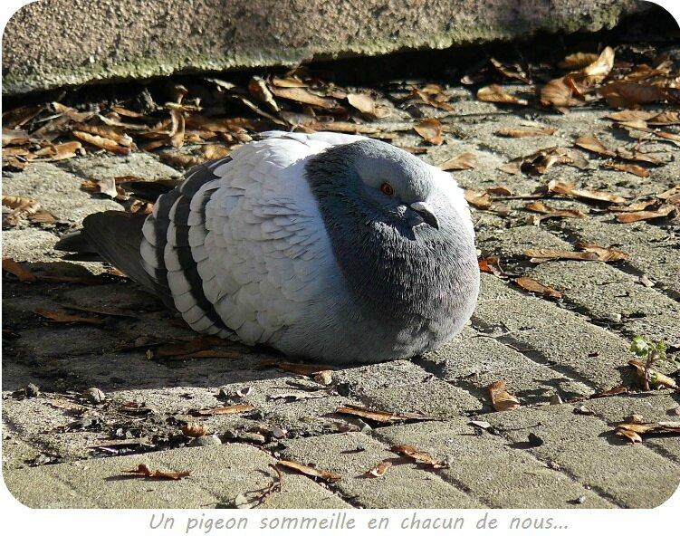 Quartier Drouot - Pigeon