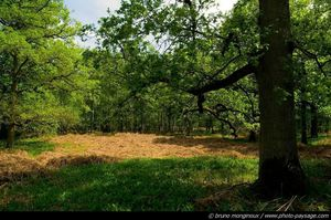 clairiere-foret-rambouillet