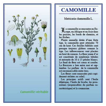 Camomille_exo