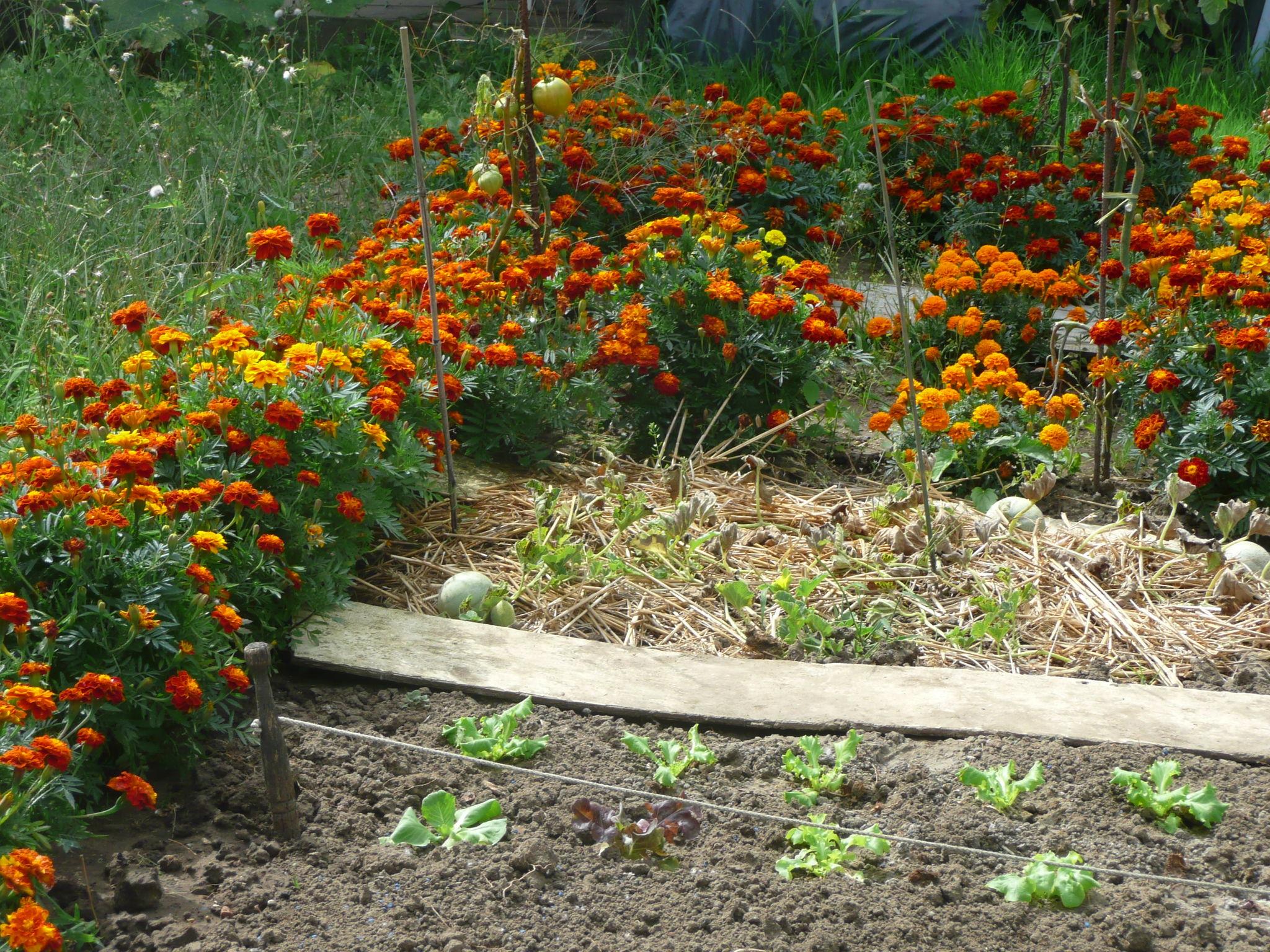 repas de famille au jardin et visite du jardin et du potager le jardin de gisounette. Black Bedroom Furniture Sets. Home Design Ideas
