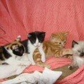 2008 04 19 4 petit chaton, 3 de Papillon et le noir et blanc de Blanco