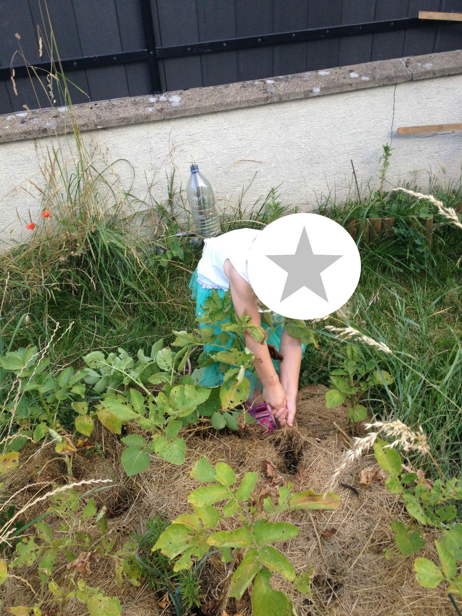 En direct live du jardin j 39 ai une souris dans le compost - Acheter de la paille pour jardin ...