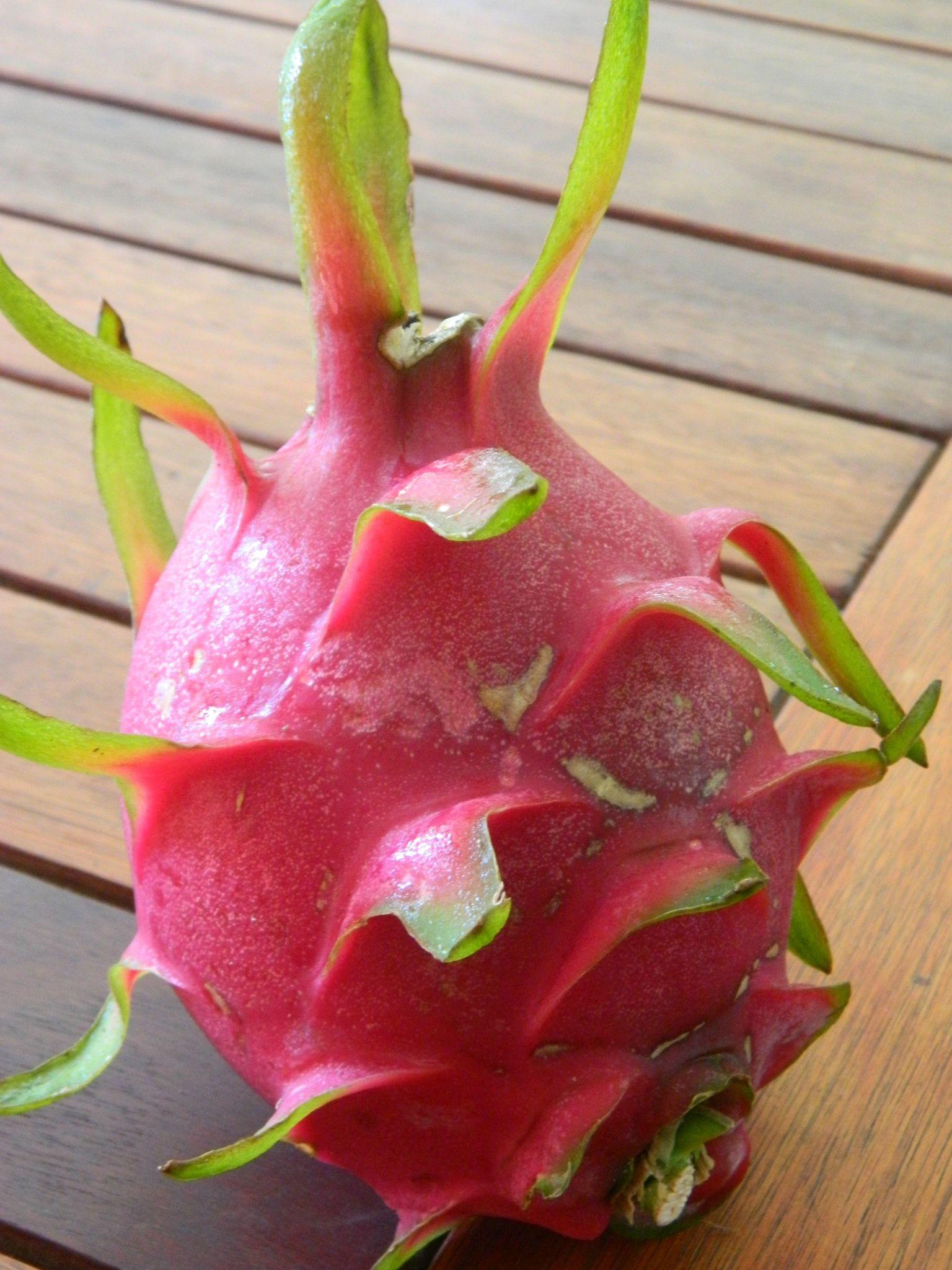 Le pitaya ou fruit du dragon destination guyane 2 ans - Arbre fruit du dragon ...