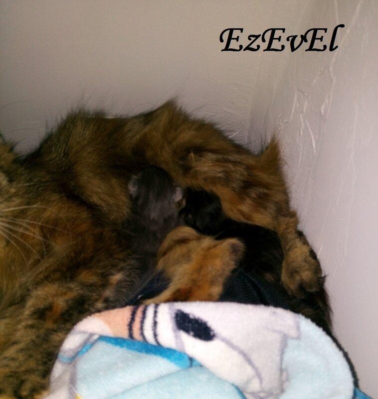 Chat EzEvEl