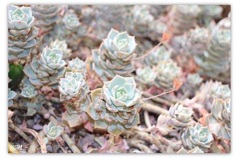 8-tropical-parc-sortie-famille-enfant-kids-bretagne-morbihan-saint-jacut-les-pins-faune-flore-tropicale-animalier-animaux-jardin-spectacle-cactus-bbtma-blog-parents-maman