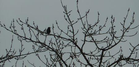 oiseau_flo_2