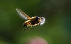 La photo du jour insect flickr Stig Nygaard