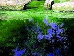 Vert_d_eau