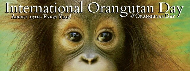 INTERNATIONAL ORANGUTAN DAY 2014