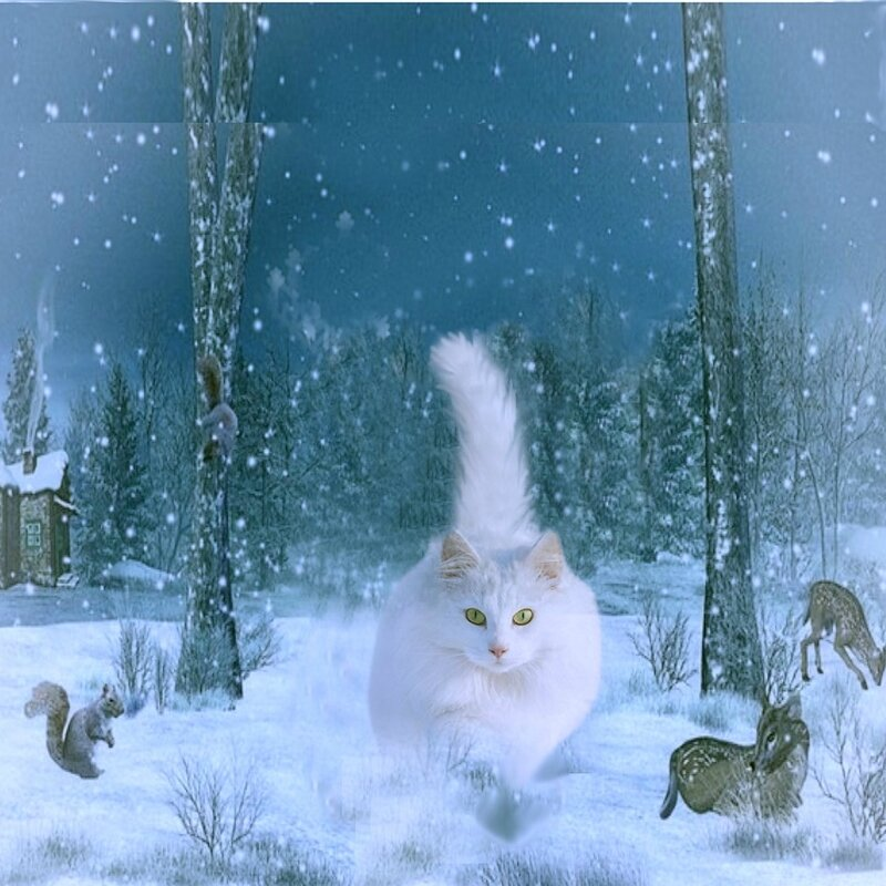 carte chat des neiges