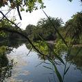 Au delà de rhinau - allemagne - septembre 2008